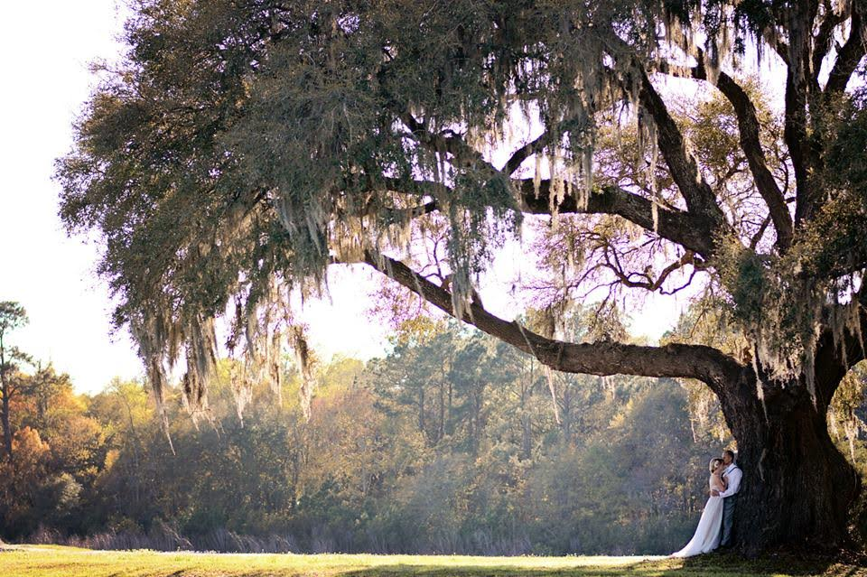 Bride and Groom Cuddle Up Under a Giant Oak Tree on a Sunny Afternoon in the South Carolina lowcountry